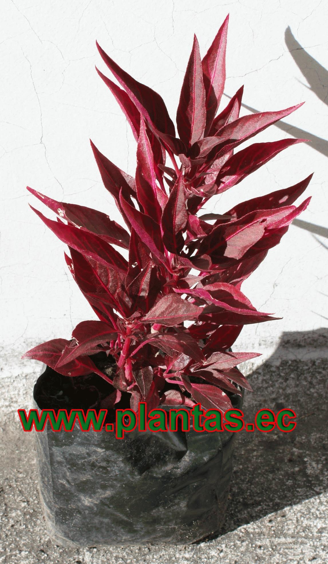 plantas ornamentales tattoo design bild On viveros online colombia
