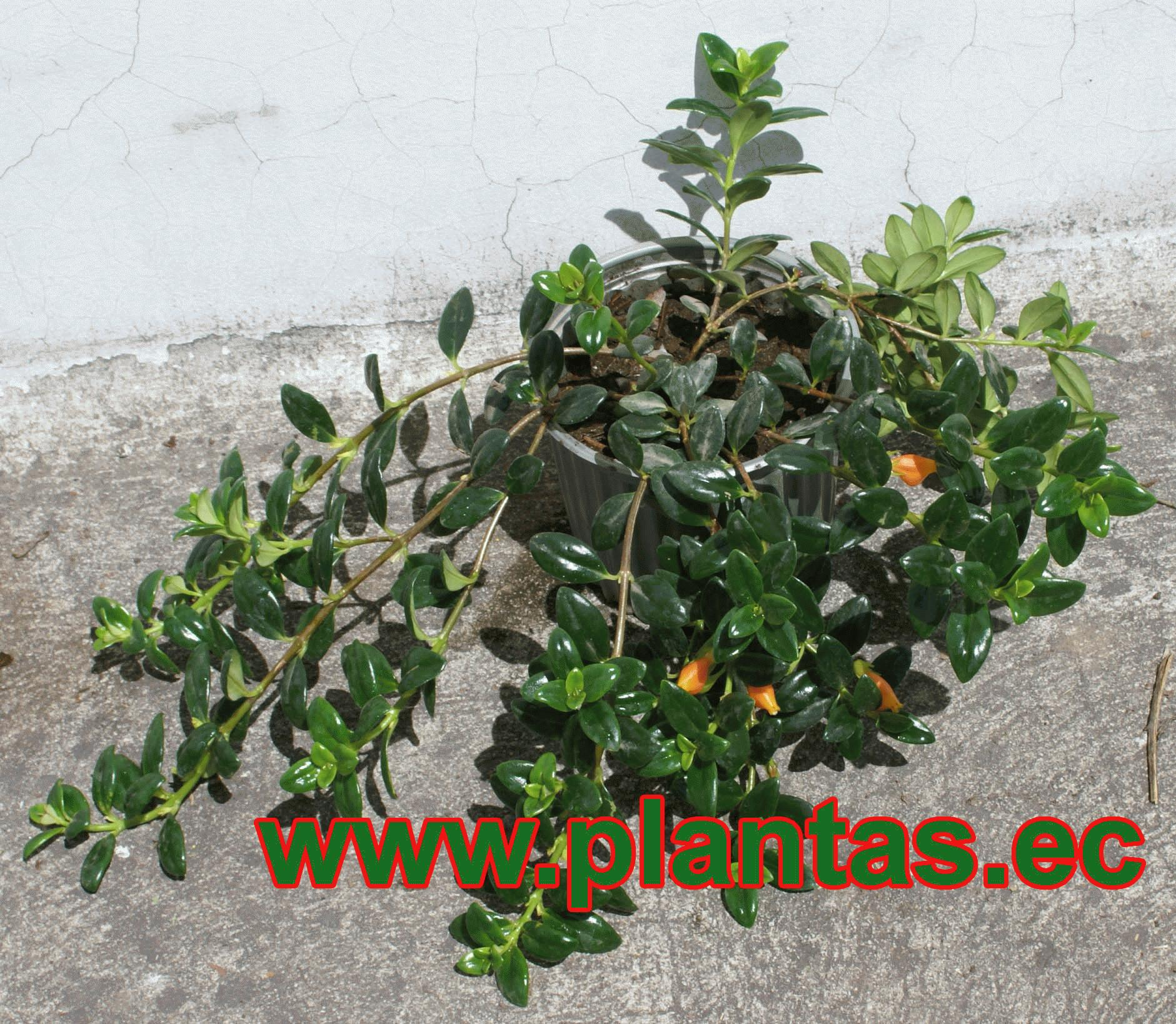 Pescadito Arboles Frutales Plantas Ornamentales Y