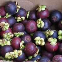 Frutas de mangostino